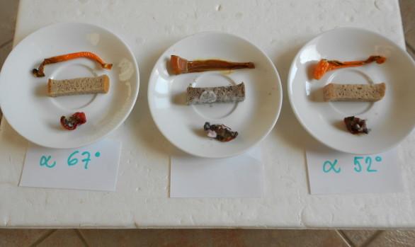 potravinová pyramida, experimenty